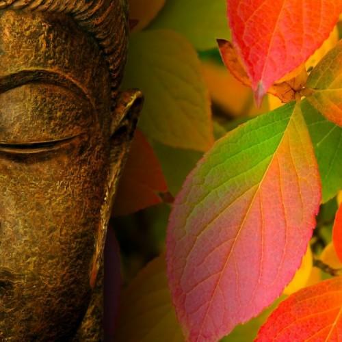 Buddha fall